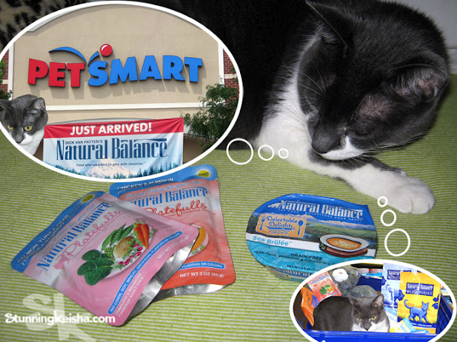 Cats with sensitive tummies can eat Natural Balance grain-free cat food and I'll tell you why