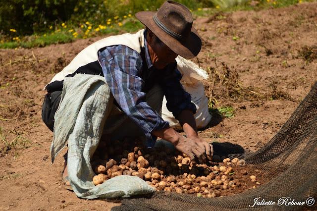 Séjour chez l'habitant sur le lac Titicaca