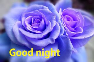 Good night blue rose photo