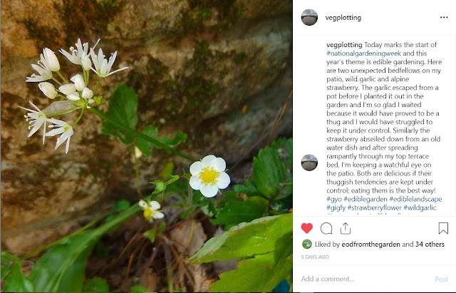 Wild garlic and alpine strawberry entry on Instagram