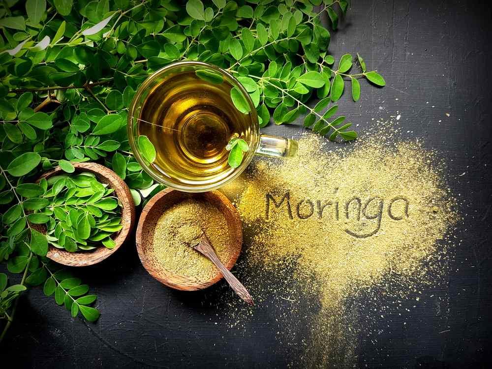 moringa oleifera tea with on table