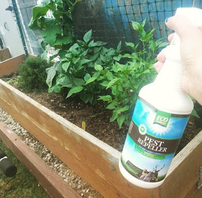 ORGANIC Pest Repellent Review By #EcoDefense