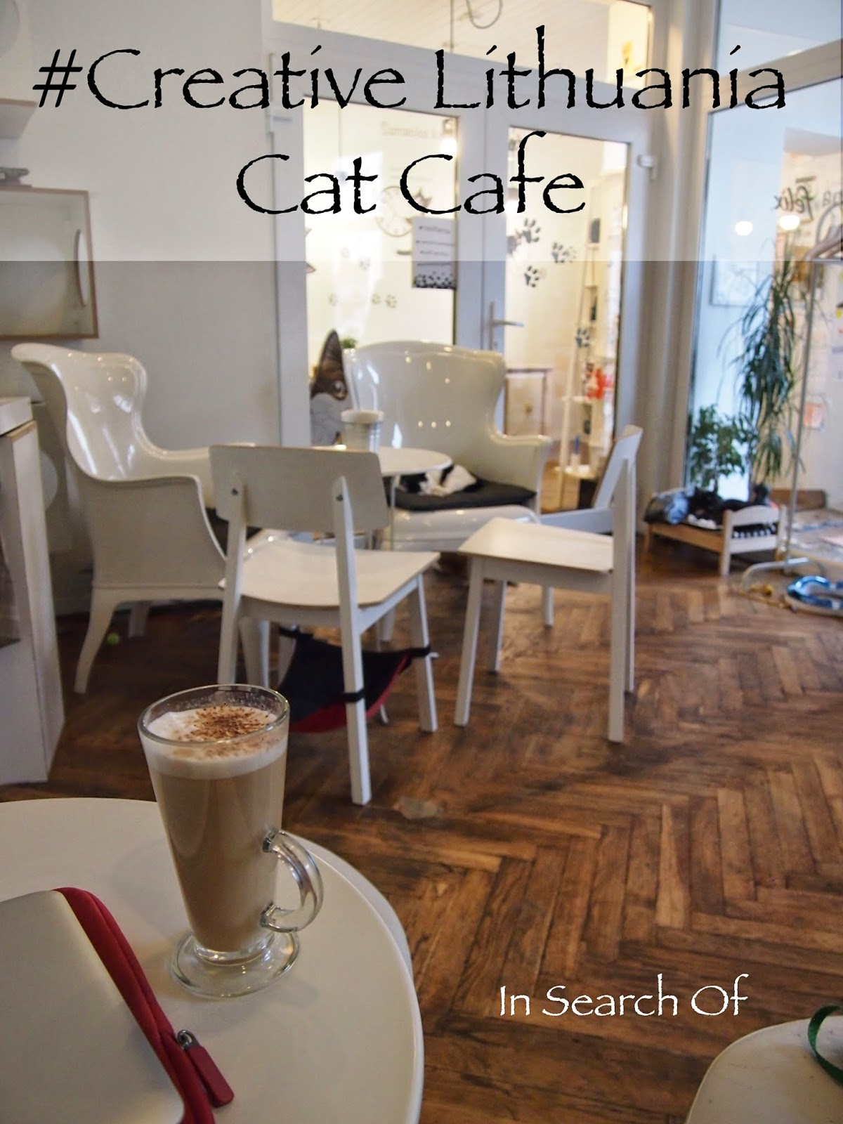 the interior of the cat cafe in Vilnius, Lithuania