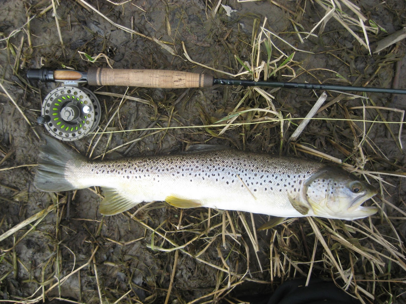 Minnesota driftless fly fishing trip report it was the for Driftless fly fishing