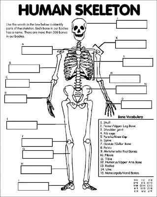 Michelles Charm World: Bones, Bones, Bones...