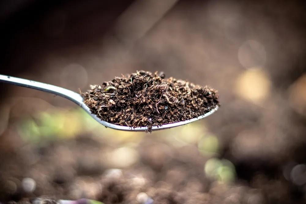 Healing Soil of Boho