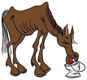 arguellat, arguellado, arguellao, caball, caballo, potro, jónec no