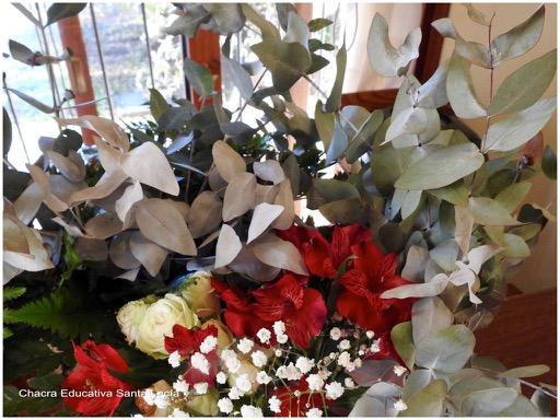 Ramo de flores y hojas de eucaliptus plateado - Chacra Educativa Santa Lucía