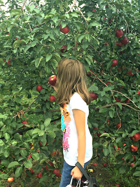 My Picks for Weekend Fun in the Chicago Suburbs September 7-9, 2018 including apple picking.