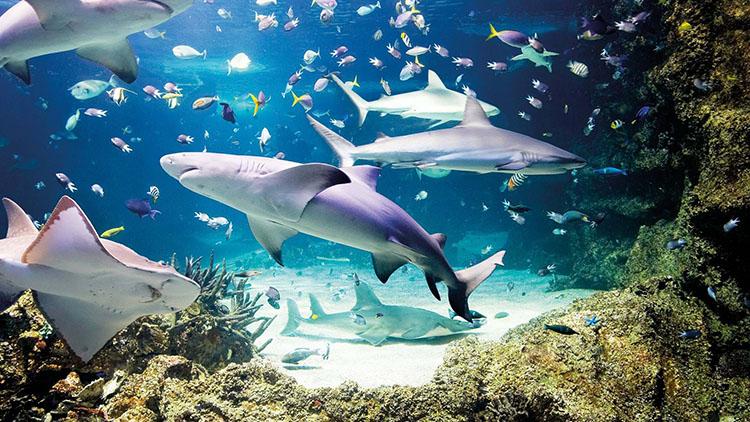 londonn aquarium