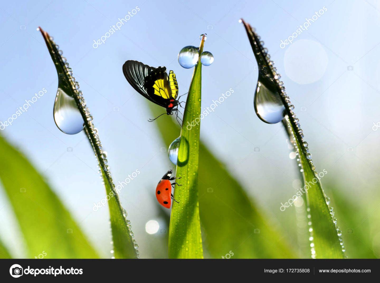 Butterfly Grass Dew Drops Hd Wallpaper Wallpapers Sensei