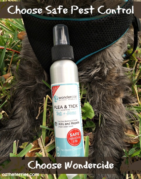 Oz the Terrier Choose Safe Pest Control. Choose Wondercide