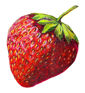 strawberry fruit image artwork illustration vintage clipart