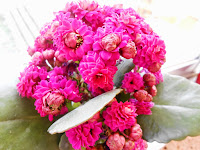 Αποτέλεσμα εικόνας για liagallika fleurs