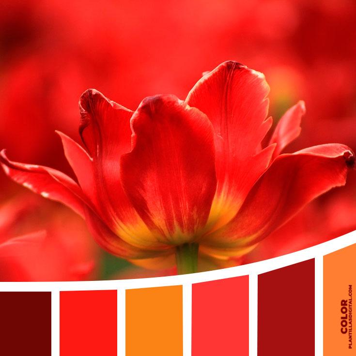 color_356