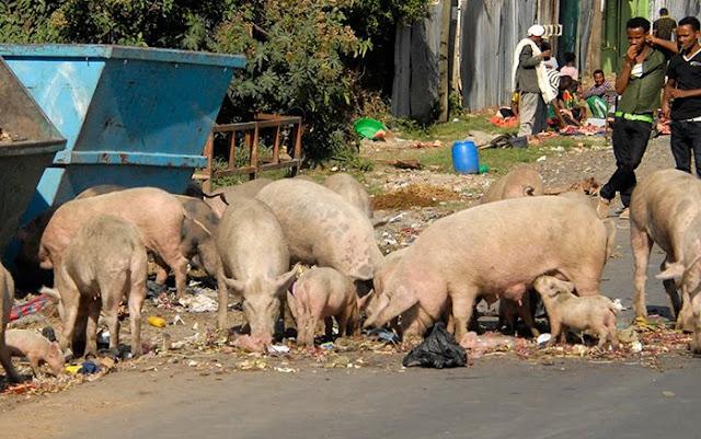 3 Alasan Mengapa Olahan Babi Begitu Menggiurkan!