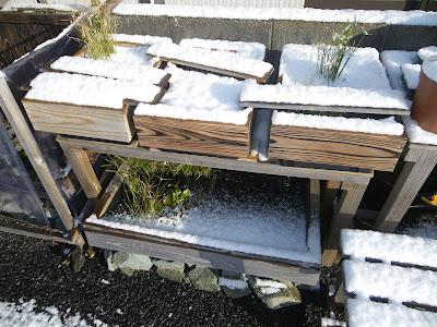 メダカのビオトープ 積雪