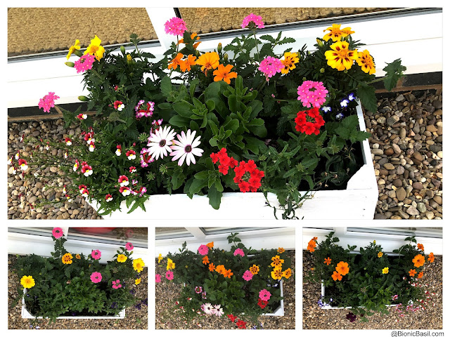 Gardening with Cats ©BionicBasil® Wooden Flower Crates