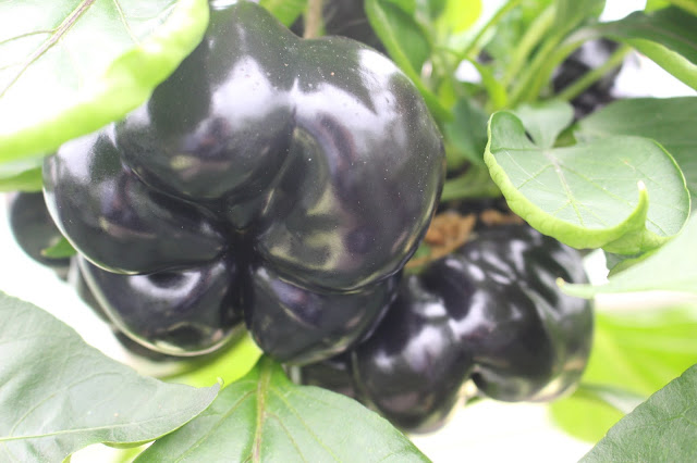 There are black peppers... who knew?