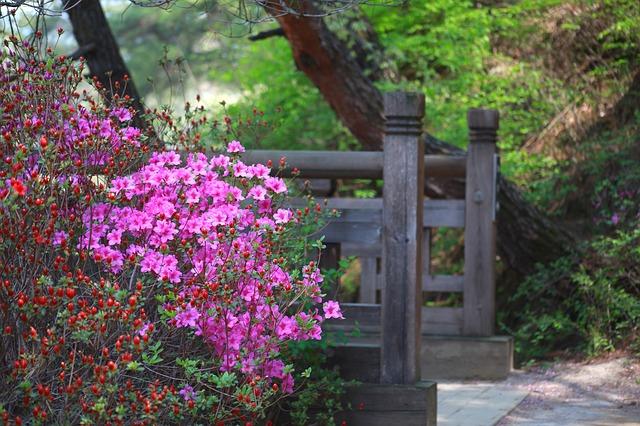 hoa đỗ quyên đẹp nhất thế giới