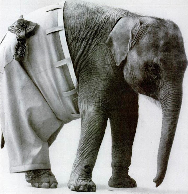 Elephant wearing pants with a belt and bandana in the pocket. No Kicking Penguins and other stories about penguins. marchmatron.com