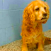 Senior Dog Left Crying At Shelter When Family Leave Her For Younger Pup