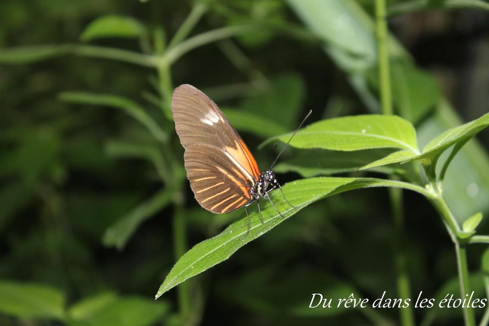 La serre papillons sortie en yvelines du r ve dans for Sortie en famille dans les yvelines