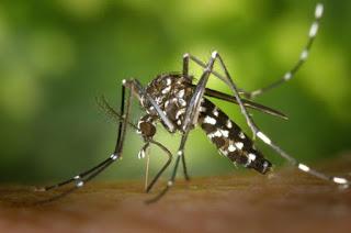 5 Cara Mudah Mencegah Nyamuk Demam Berdarah