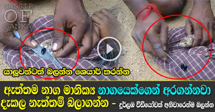 Naga Manikkam - Man removes Snake Pearl stone from cobras head