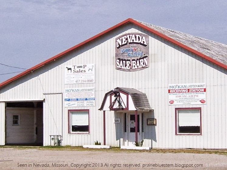 Prairie Bluestem: The Nevada Sale Barn