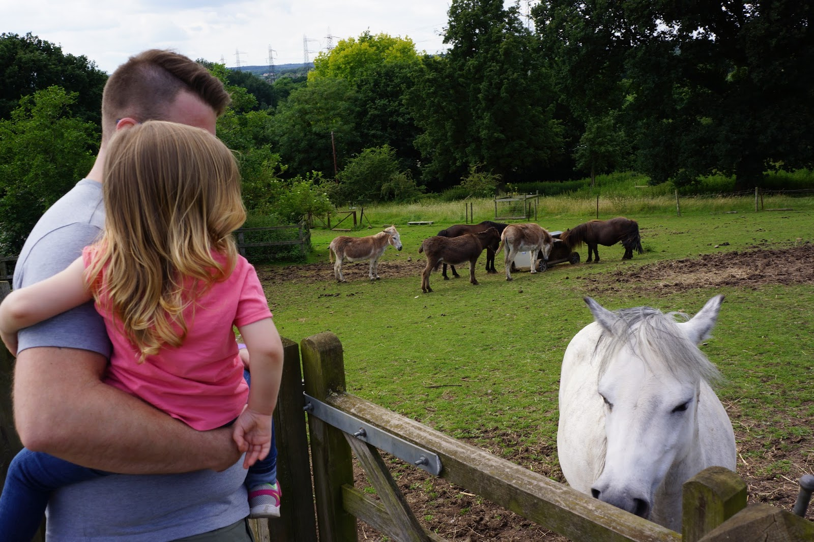 dad and daughter looking at a white horse