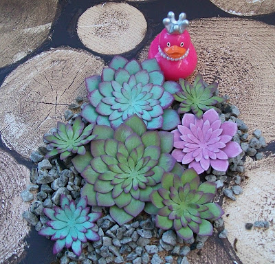 Craftyduckydoodah!, Oh So Succulent, Stampin' Up! UK Independent Demonstrator Susan Simpson, Succulent Framelits Dies, Supplies available 24/7,