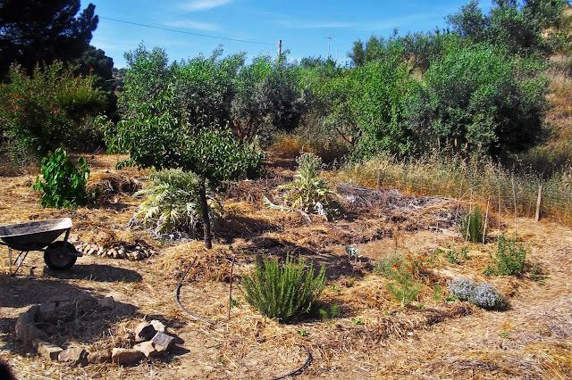 orti biologici sicilia