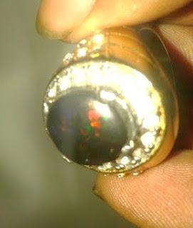 kunci sukses merawat black opal