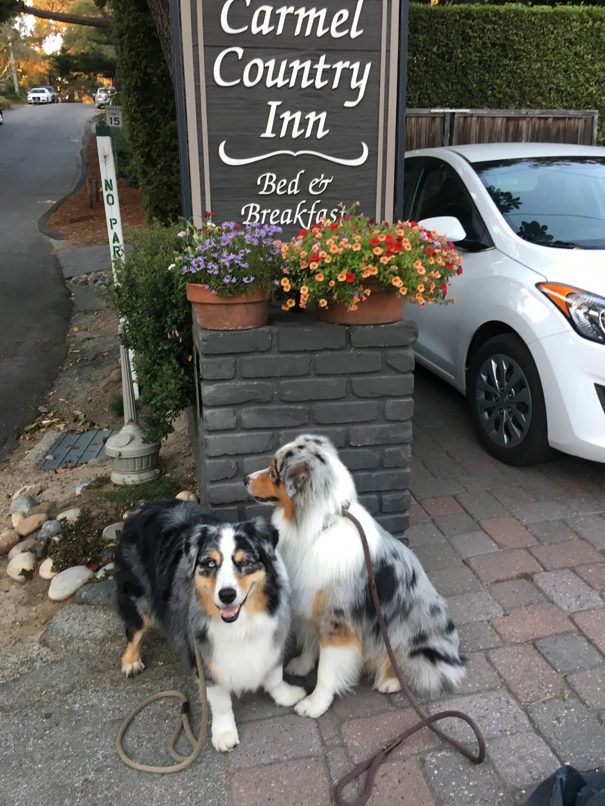 Bliss And Seven S Adventure In The Northern California Town Couldn T Have Been Better Carmel Has 25 Pet Friendly Hotels B Bs Inns