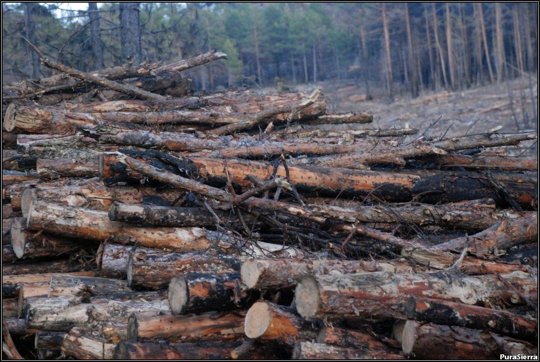 Tras el tremendo incendio de 2009 (El Hoyo, Poyatos)