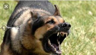 Manfaat dan perbedaan ketiga jenis anjing pada game life after mobile