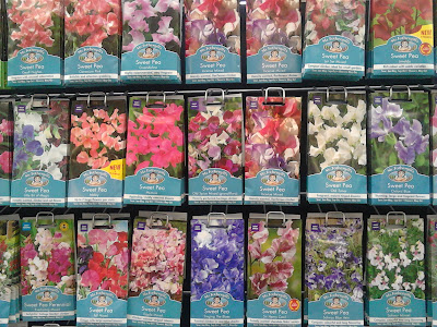 Sweet pea varieties, lathyrus odoratus Green Fingered Blog