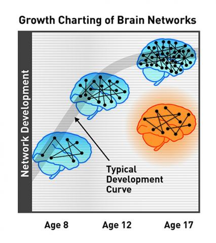 Brain Growth Charts For Kids Science Fun
