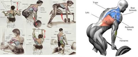 4 Simple Keys To Developing A Wide Muscular Back