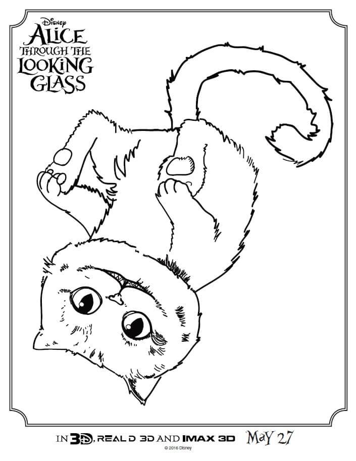 Cat Wiring