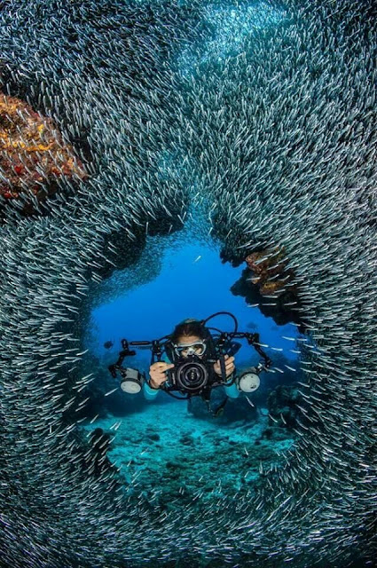 pictures of Fish