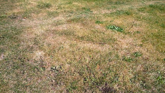 der Rasen ist auch vertrocknet  (c) by Joachim Wenk