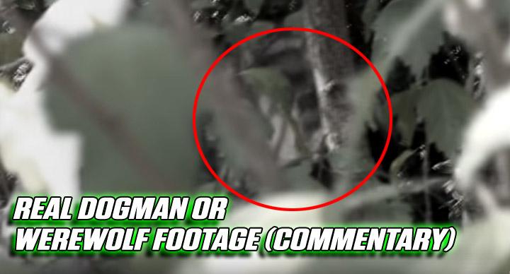 The Crypto Blast: ParaBreakdown: Real Dogman Or Werewolf Footage