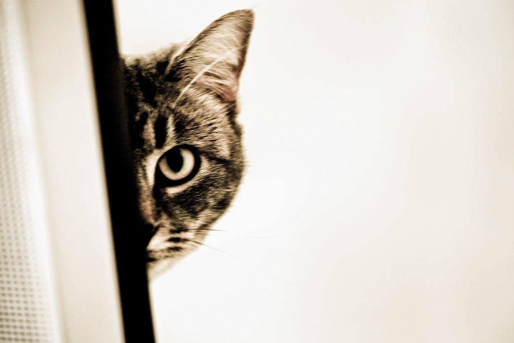 Blender Cat Tutorial