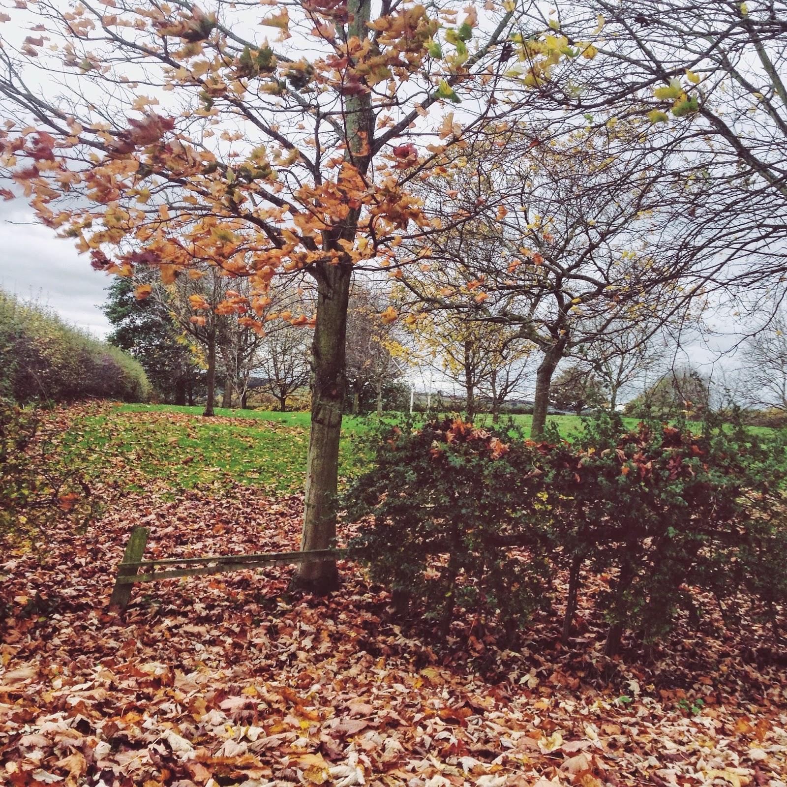 Nottingham Autumn Tree Leaves