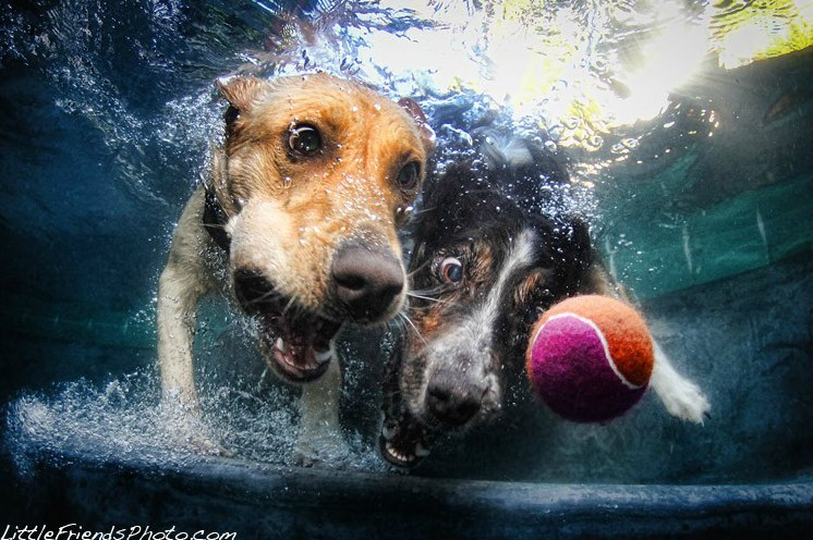 Great Pictures: Underwater Dog Photography By Seth Casteel