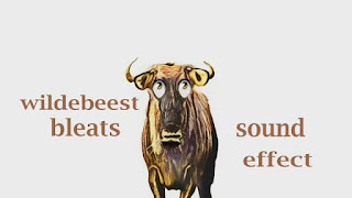 sounds of gnu