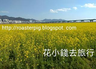大渚生態公園油菜花盛開