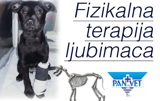 Fizikalna terapija u veterinarskoj ortopediji
